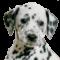 Afbeelding voor Nintendogs Dalmatian and Friends