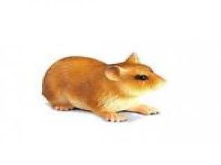 Hamsterz: Hamster Feest!: Afbeelding met speelbare characters