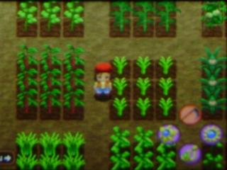 Door groenten te telen help je de mensen en zorg je voor nieuwe bedrijven op het eiland!