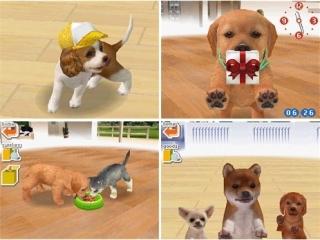 Je zult je huisdier moeten voeden, mee moeten spelen en wie weet wat nog meer! Maar dat is juist leuk!