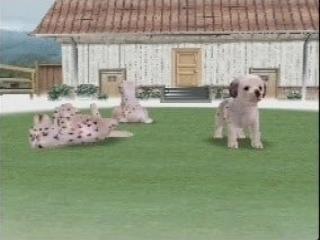 Nintendogs Dalmatian and Friends: Screenshot