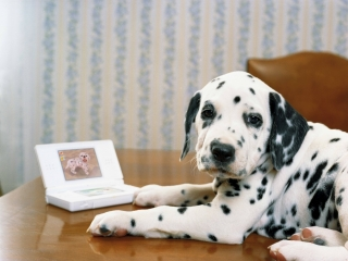 afbeeldingen voor Nintendogs: Dalmatian & Friends