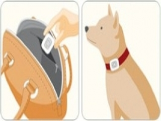 Je kunt zelfs met de meter de stappen van je huisdier tellen!